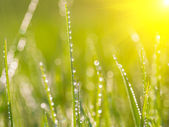 Fresh morning dew on spring grass. — Stock Photo