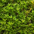 Box background with green leaves — Stock Photo