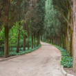 Path through trees in the forest — Stock Photo #19184323