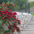 White trellis supporting a red rose vine. — Stock Photo