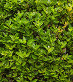 Vak achtergrond met groene bladeren — Stockfoto