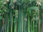 Groene bamboebos — Stockfoto