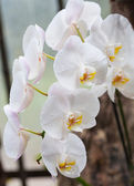 Branch of white orchid — Stock Photo