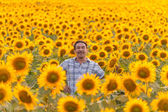 Farmer looking at sunflower — Stock Photo
