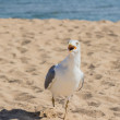 Gull on beach — Stock Photo