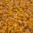 Autumn leaves, very shallow focus — Stock Photo #29631183