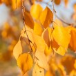 Autumn leaves, very shallow focus — Stock Photo #29631323