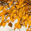 Autumn leaves, very shallow focus — Stock Photo #29631327