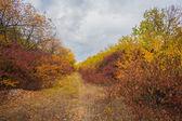 Pathway in the autumn park — Stock Photo