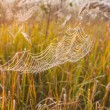 The spider web (cobweb) — Stock Photo