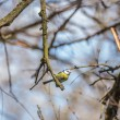 Great Tit — Stock Photo #40958233