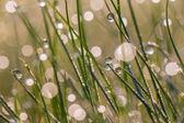 Fresh morning dew on spring grass — Stock Photo