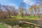 Spring river — Stock Photo
