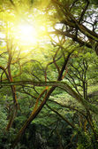 Green jungle forest with ray of light. — Stock Photo