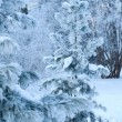View of christmas trees through snow — Foto de Stock