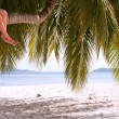 Stock Photo: Legs of couple sitting on palm tree on paradise island