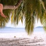 Legs of couple sitting on palm tree on a paradise island — Stock Photo