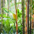 Picture of tropical forest — Stock Photo