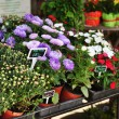 Stock Photo: Fresh flowers on market stand