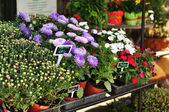 Fresh flowers on the market stand — Stock Photo
