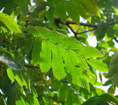 Green leafs on sky background — Stock Photo