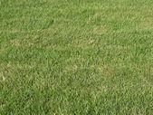 Hierba verde de fondo — Foto de Stock