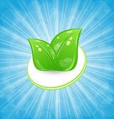 Eco-vänlig kort med gröna blad och blå strålar — Stockvektor