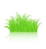 Hierba verde con reflejo aislado sobre fondo blanco — Vector de stock