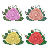 Close-up set of roses isolated on white background — Stock Vector