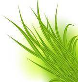 白い背景で隔離の緑の草 — ストックベクタ