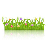 Green grass with flower isolated on white background — Stock Vector