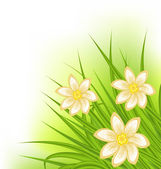 Green grass with flowers, spring background — Cтоковый вектор