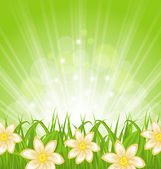 Spring background with green grass and flowers — ストックベクタ