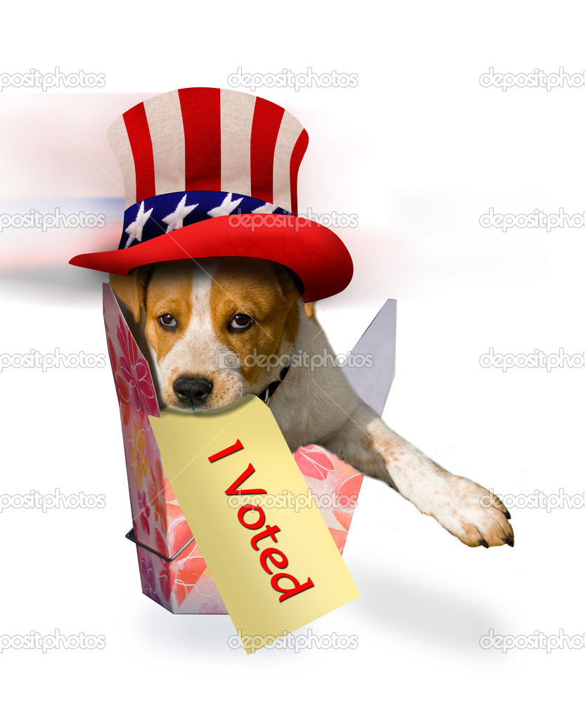 Cute puppy just voted. — Stock Photo #12108201