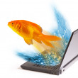 Royalty-Free Stock Photo: Goldfish.