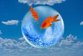Goldfish Jumping. — Stock Photo