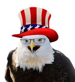 American Bald Eagle. — Stock Photo