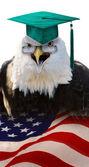 Professor eagle. — Stockfoto