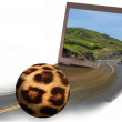 Leopard Skin Ball. - Stock Photo