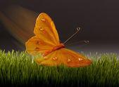 Motyl. — Zdjęcie stockowe