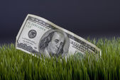 Contant geld in het gras. — Stockfoto