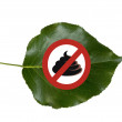 No poop on leaf. — Stock Photo #25504363