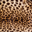 Real Leopard Skin. — Stock Photo