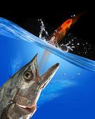 Captura de peixe. — Foto Stock