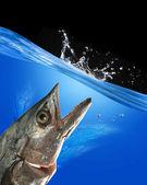 Monster Fish. — Stock Photo
