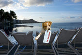 Doggy on vacation. — Stock Photo