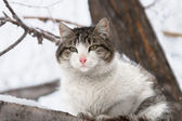 Beautiful cat — Stockfoto