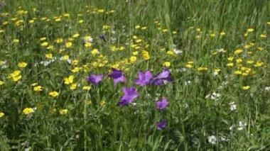 Wildflowers — Stock Video