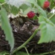 Bird in nest — Stock Video #28990007