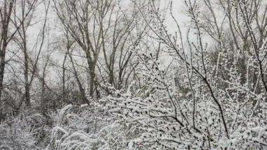 Snowfall — Vídeo de stock